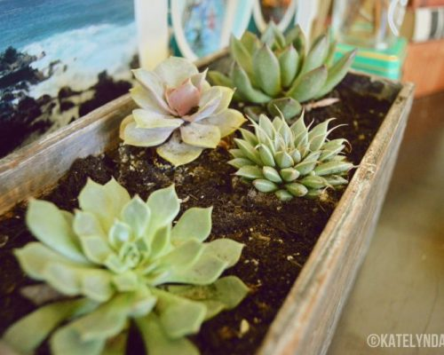 BLOGPOST: DIY Succulent Planter