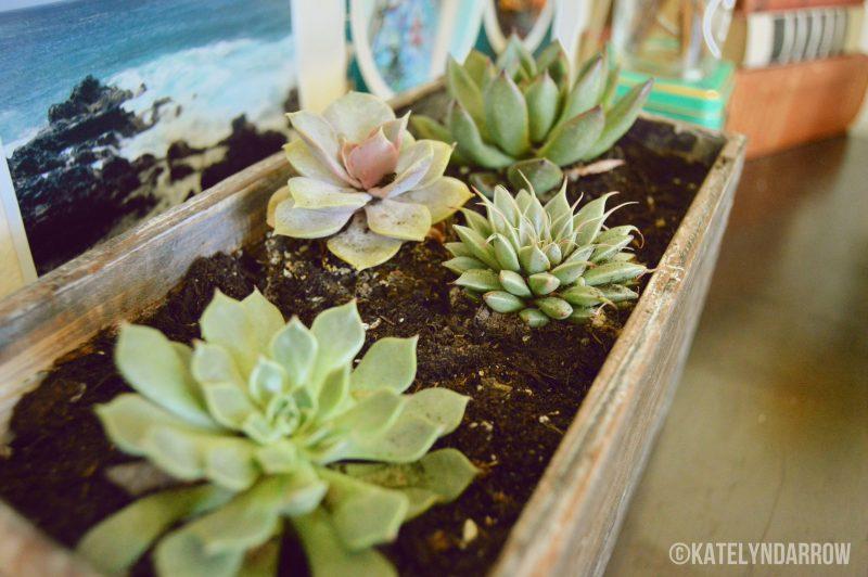 BLOGPOST: DIY Succulent Planter