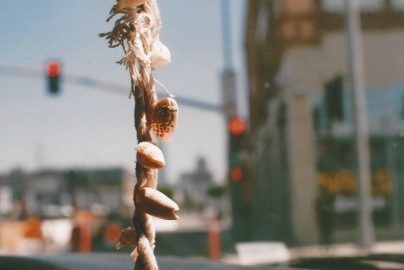 35MM SNAPSHOTS: A Morning in Malibu